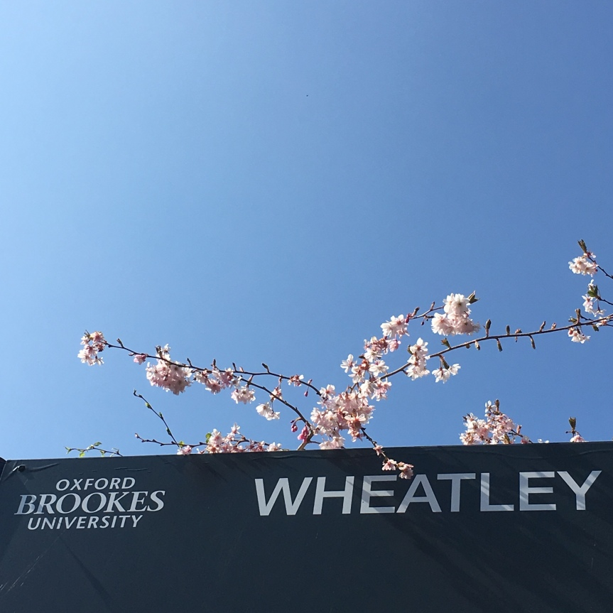 sign for Oxford Brookes University Wheatley. Sppring blue sky and cherry blossom